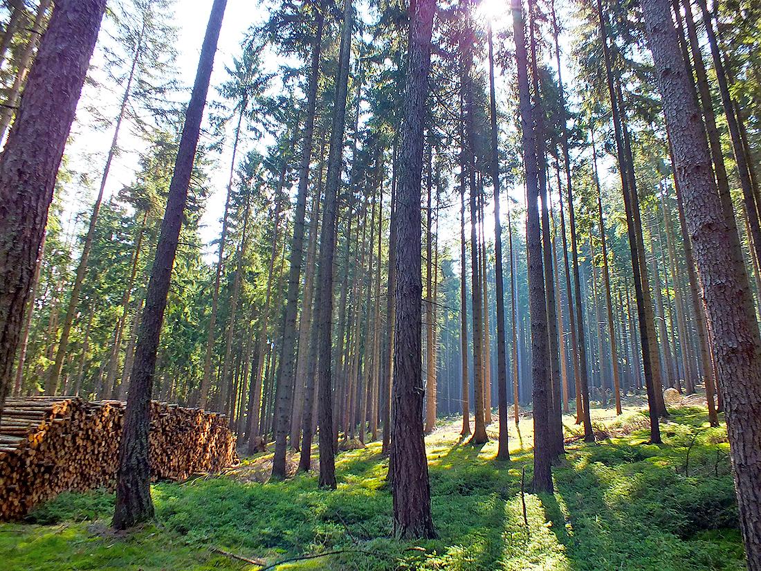 Egerer Wald