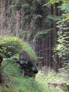 In der Stille des Waldes