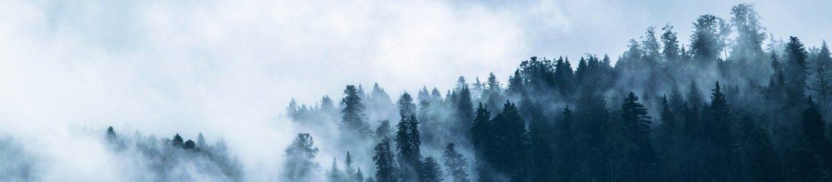 Spaziergang durch Wald und Flur – Natur heilt