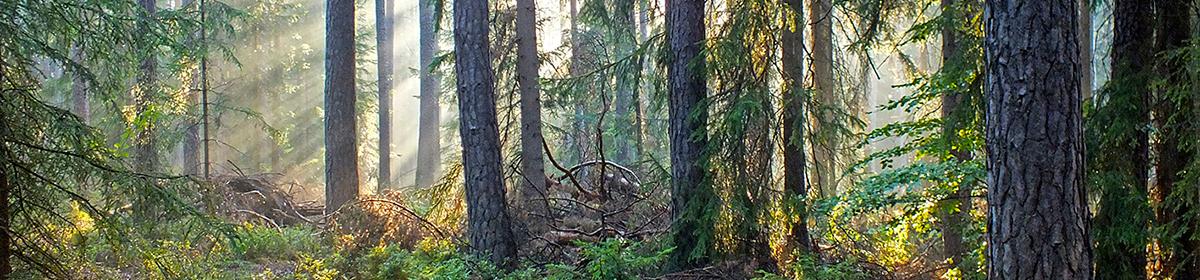 Wald & Gesundheit 2020